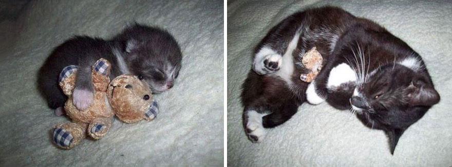 foto-di-gatti-che-crescono-prima-e-dopo-35