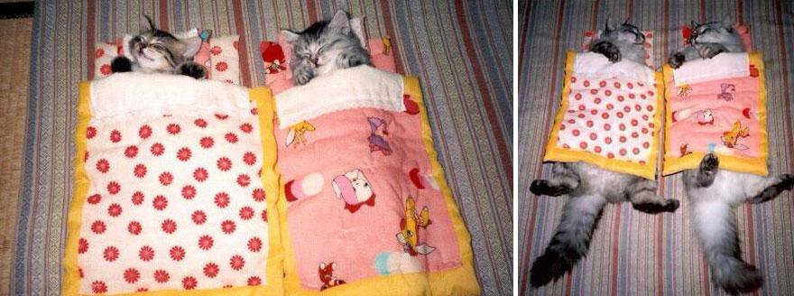 foto-di-gatti-che-crescono-prima-e-dopo-37