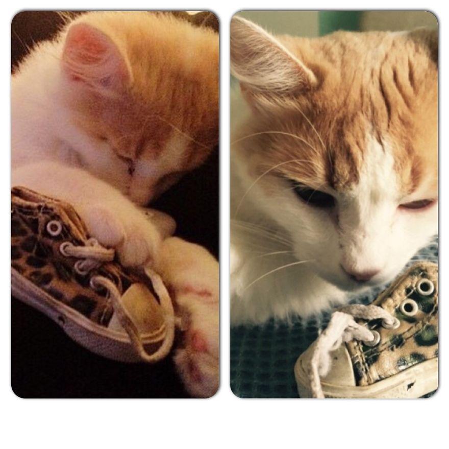 foto-di-gatti-che-crescono-prima-e-dopo-38
