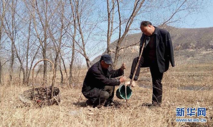 amici-anziani-cieco-disabile-senza-braccia-piantano-10000-alberi-cina-06