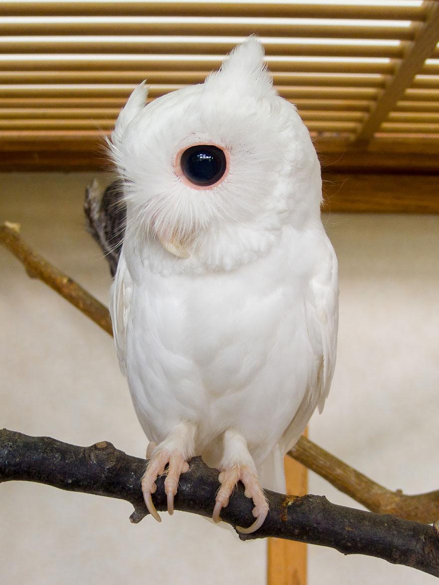 animali-albini-bianchi-01