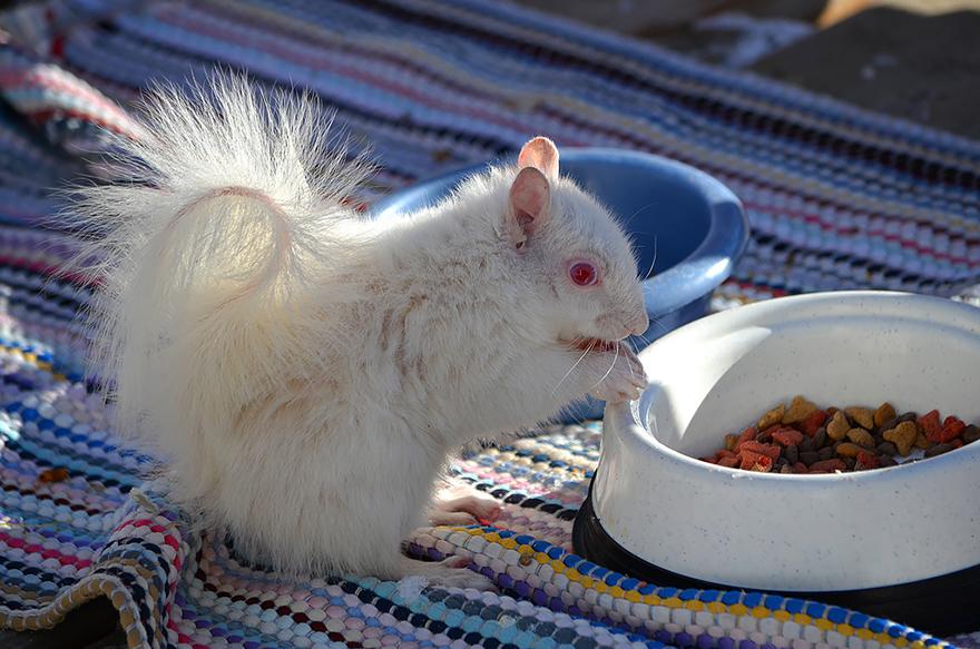 animali-albini-bianchi-11
