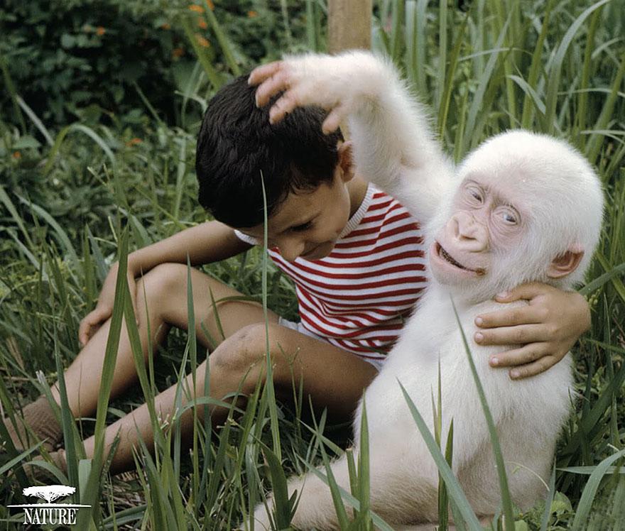 animali-albini-bianchi-19