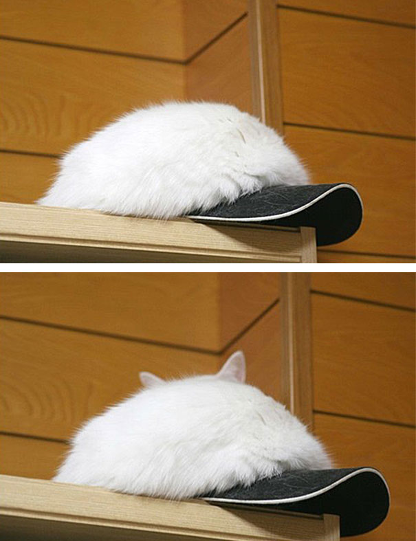 Gatti mimentizzati che giocano a nascondino
