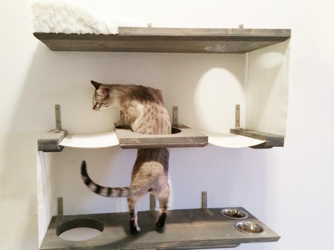Percorsi per gatti con tanto di lettini e tiragraffi che for Parete attrezzata gatti