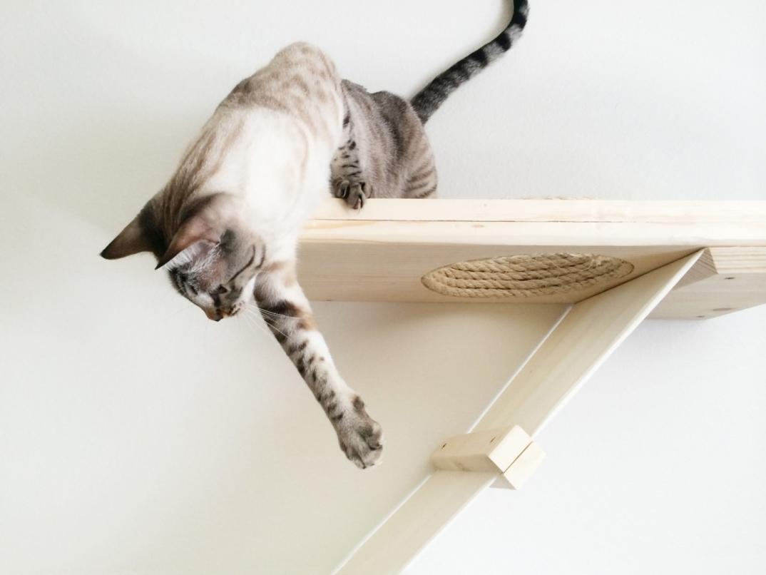 Articoli Per Gatti Articoli Per Animali Casa Arredamento E Pictures to ...