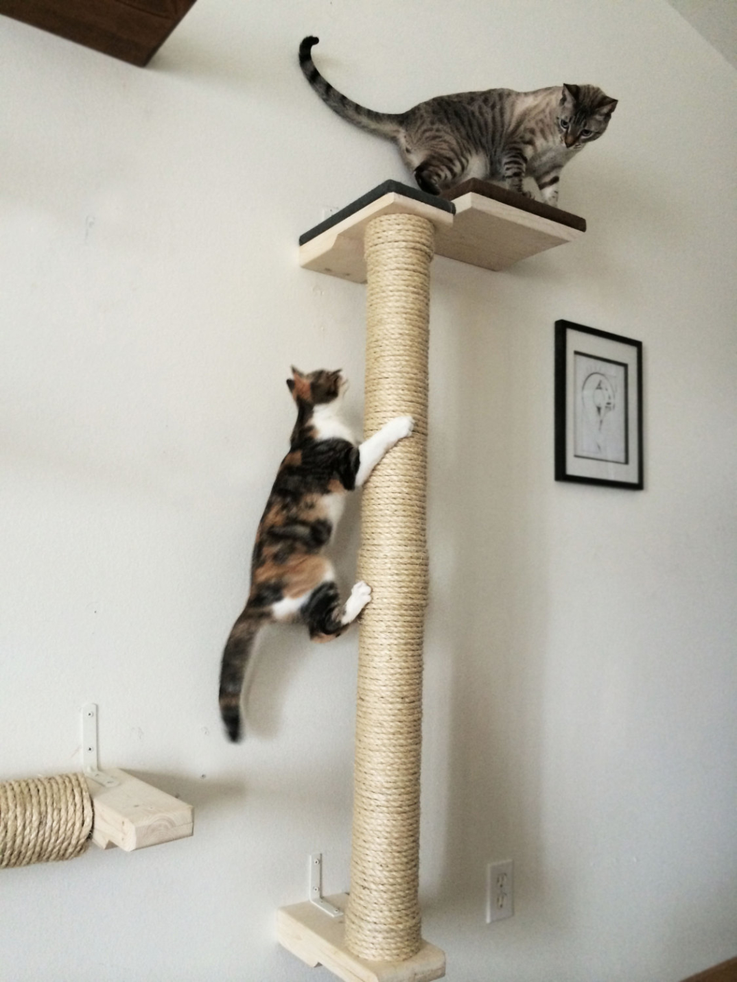 Make A Cat Climbing Pole