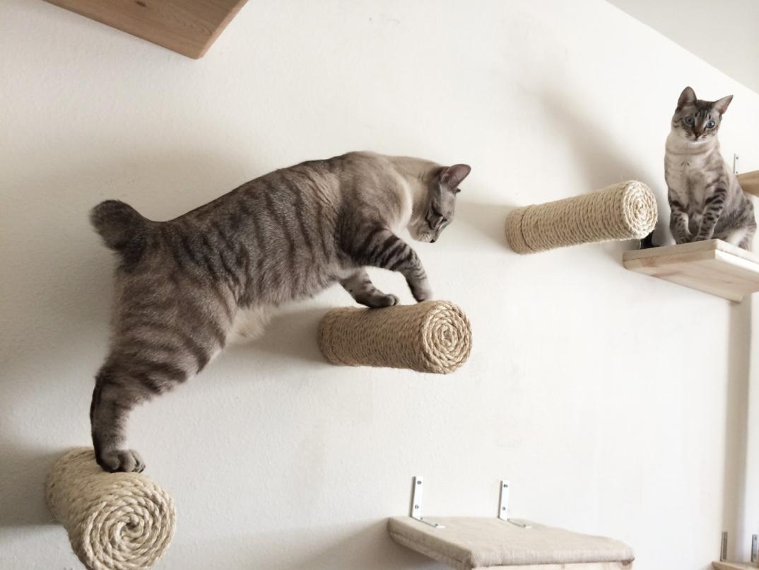 Mobili Per Gatti Fai Da Te : Percorsi per gatti con tanto di lettini e tiragraffi che faranno