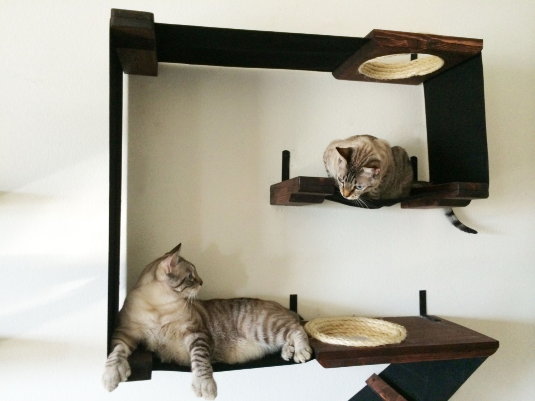 Percorsi per gatti con tanto di lettini e tiragraffi, che faranno felice il vostro gatto - KEBLOG