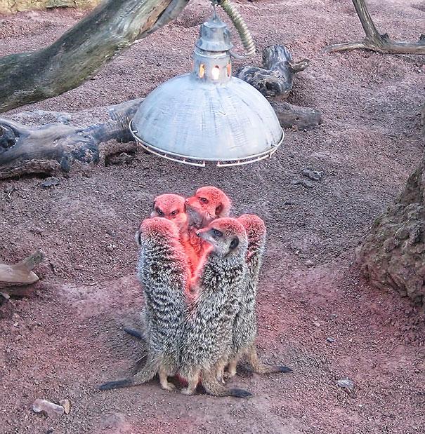 animali-amano-tepore-18