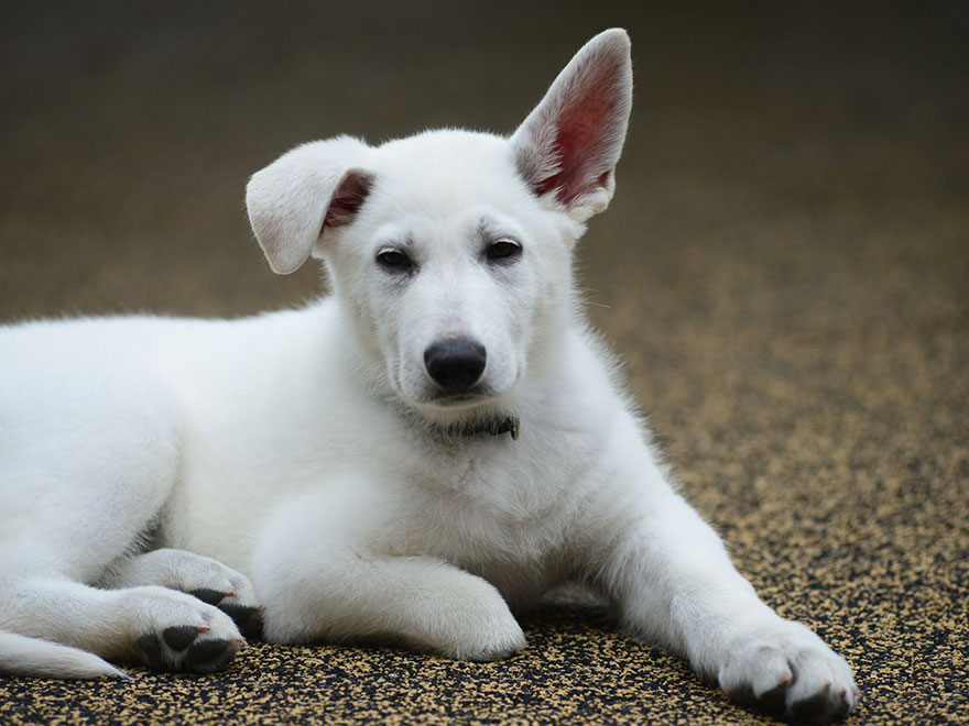 bambina-3-anni-piedi-amputati-cucciolo-cane-senza-zampa-5