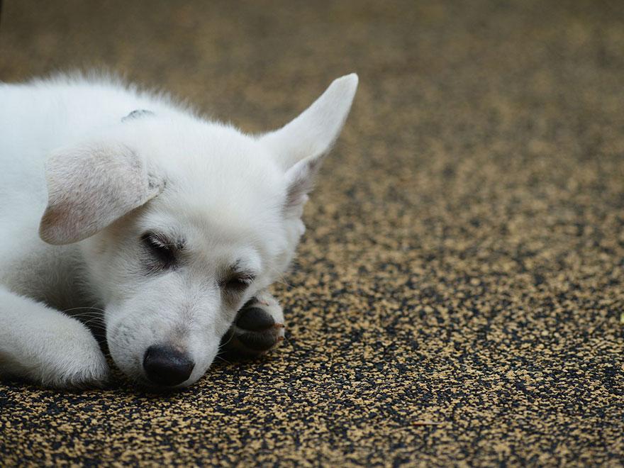 bambina-3-anni-piedi-amputati-cucciolo-cane-senza-zampa-8