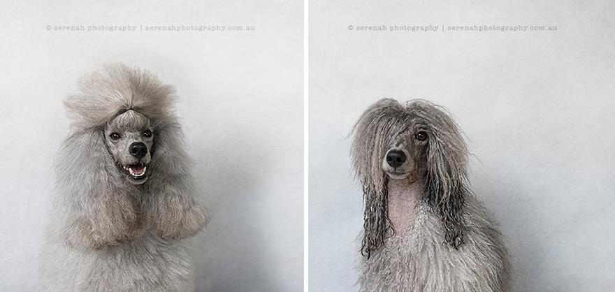 Cani bagnati ritratti fotografici serenah hodson 1 keblog - Bagno cane dopo antipulci ...