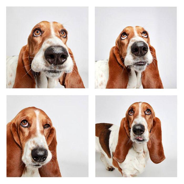 foto-tessera-cani-divertenti-Guinnevere-Shuster-01