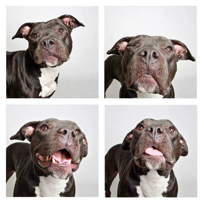 foto-tessera-cani-divertenti-Guinnevere-Shuster-04