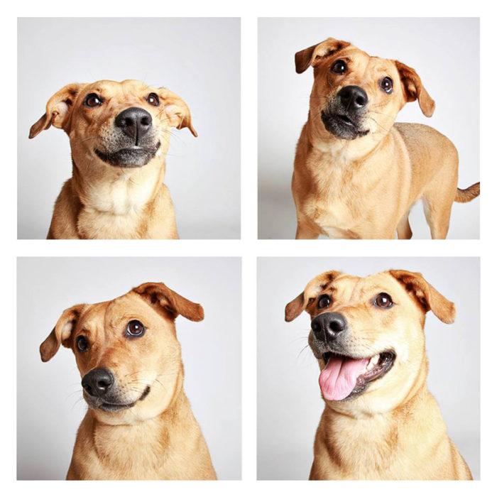 foto-tessera-cani-divertenti-Guinnevere-Shuster-05