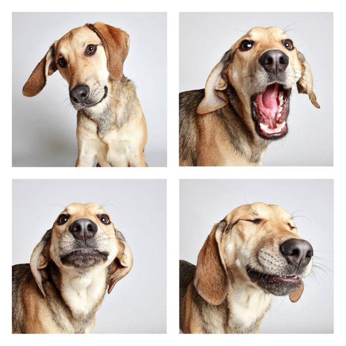 foto-tessera-cani-divertenti-Guinnevere-Shuster-06
