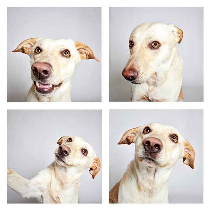 foto-tessera-cani-divertenti-Guinnevere-Shuster-08