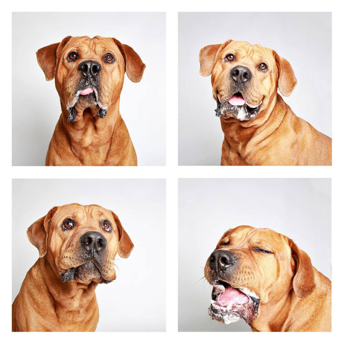foto-tessera-cani-divertenti-Guinnevere-Shuster-10