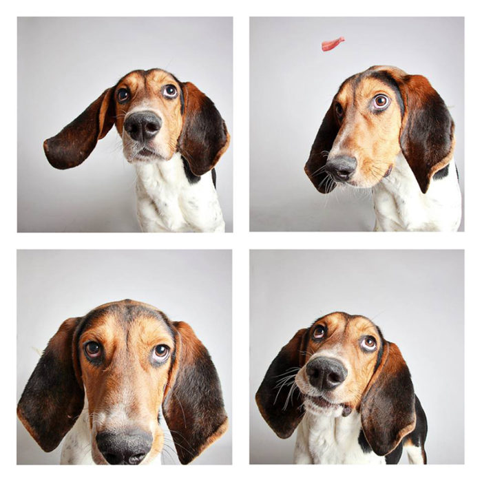foto-tessera-cani-divertenti-Guinnevere-Shuster-12