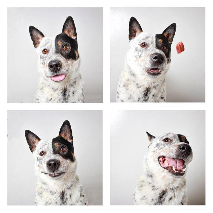 foto-tessera-cani-divertenti-Guinnevere-Shuster-13