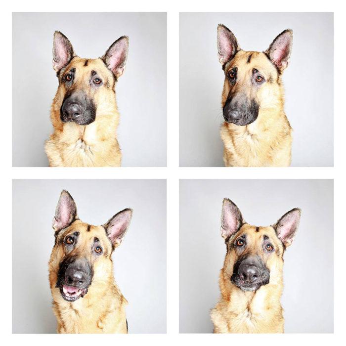 foto-tessera-cani-divertenti-Guinnevere-Shuster-15