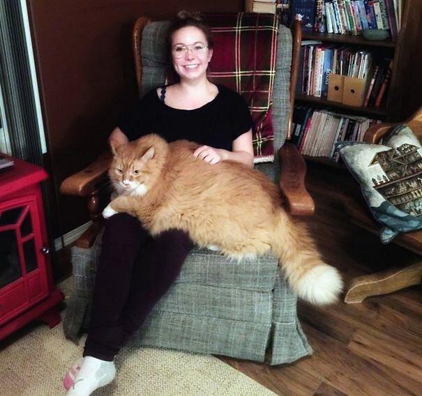 Gatti giganti