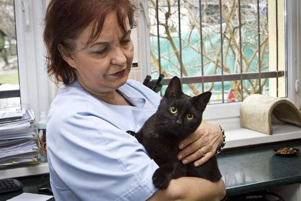gatto-infermiere-veterninario-abbraccia-animali-malati-radamenes-1