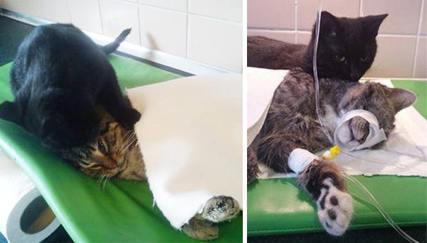 gatto-infermiere-veterninario-abbraccia-animali-malati-radamenes-2