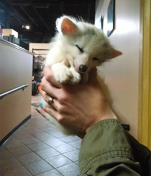 graziosi-cuccioli-animali-palmo-della-mano-22