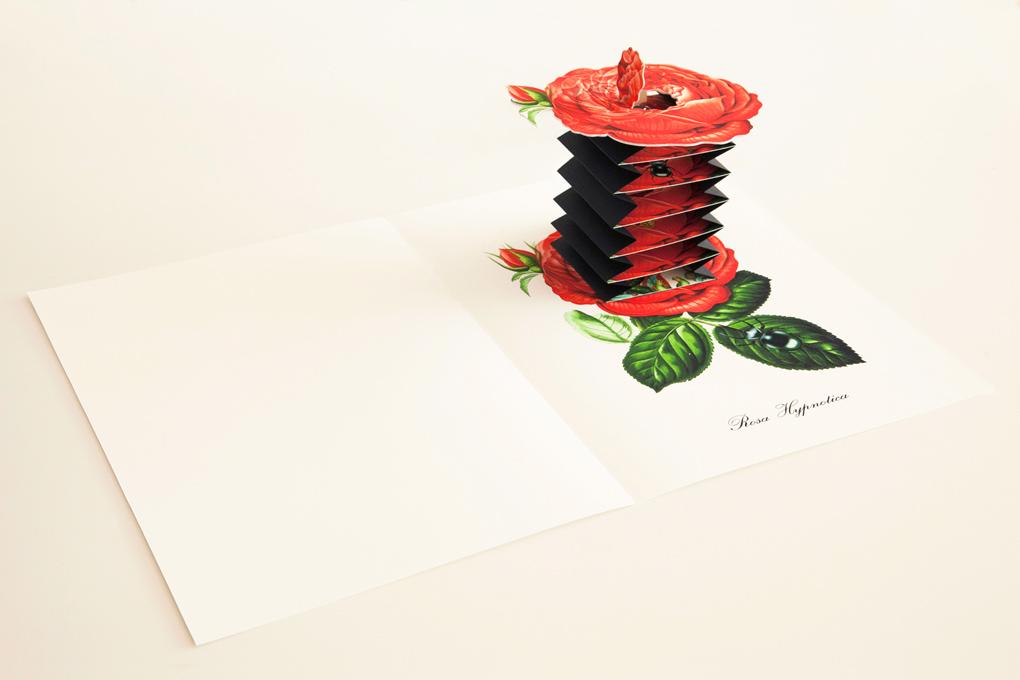 libri-animati-pop-up-3d-tridimensionali-natura-fantasia-Bożka-02