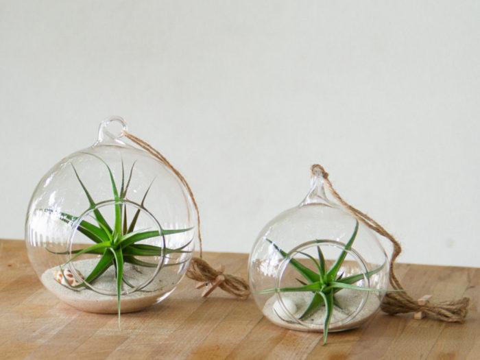 Piante In Casa Idee : La tillandsia e le piante aeree o epifite per arredare