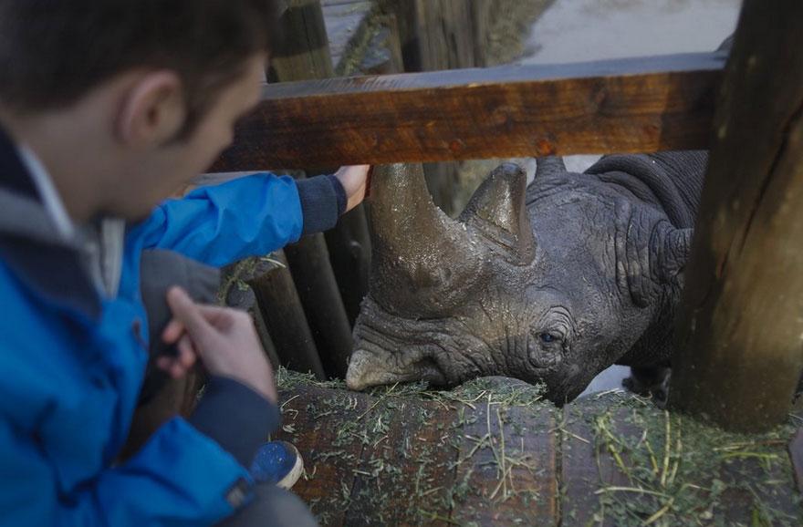 ultimo-rinoceronte-bianco-del-nord-estinzione-riserva-ranger-kenya-10