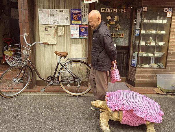 uomo-anziano-porta-a-passeggio-tartaruga-gigante-tokyo-1
