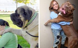 109 cani che non hanno idea di quanto siano enormi