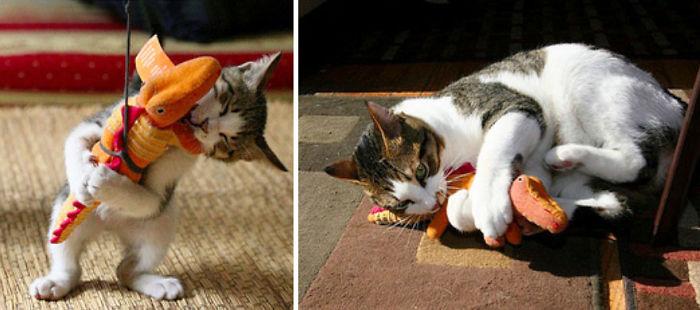 cani-gatti-prima-e-dopo-crescono-giocattoli-cuccioli-adulti-01