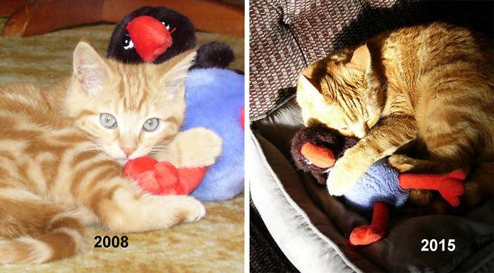 cani-gatti-prima-e-dopo-crescono-giocattoli-cuccioli-adulti-02