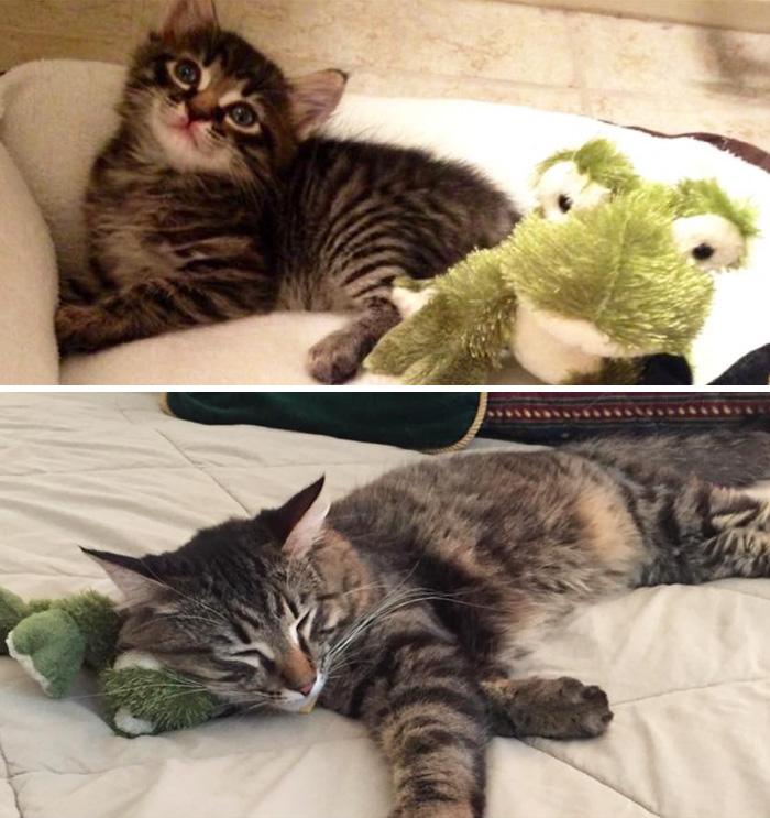cani-gatti-prima-e-dopo-crescono-giocattoli-cuccioli-adulti-06