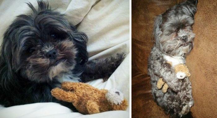 cani-gatti-prima-e-dopo-crescono-giocattoli-cuccioli-adulti-08