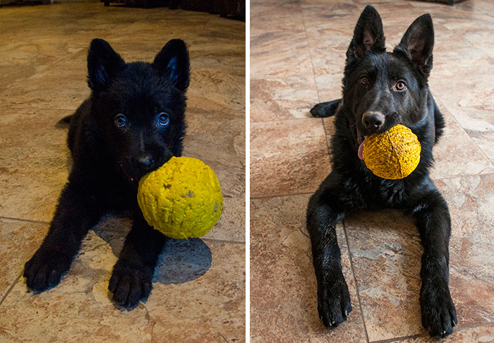 cani-gatti-prima-e-dopo-crescono-giocattoli-cuccioli-adulti-10