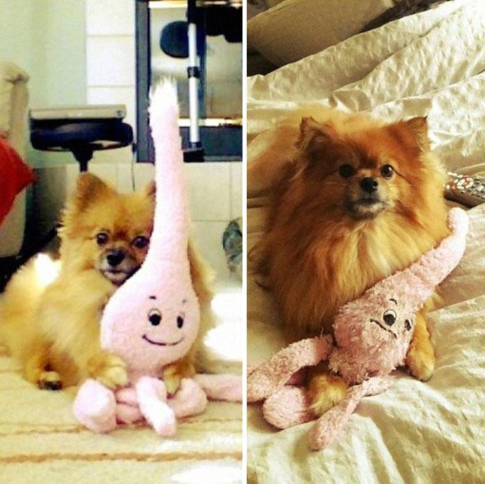 cani-gatti-prima-e-dopo-crescono-giocattoli-cuccioli-adulti-11