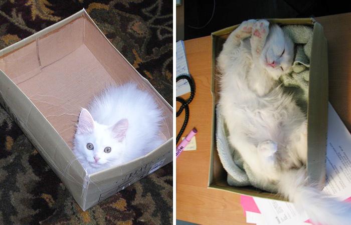 cani-gatti-prima-e-dopo-crescono-giocattoli-cuccioli-adulti-12