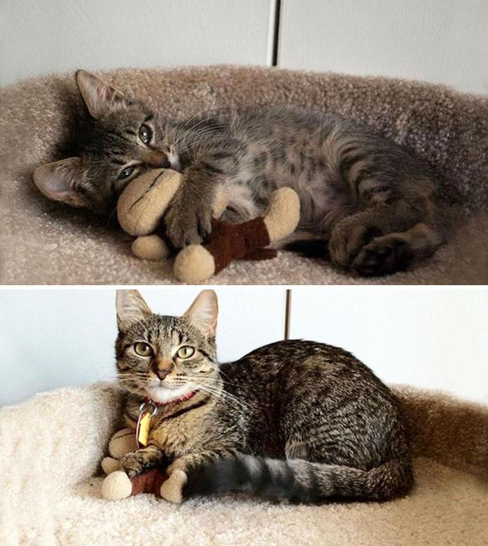 cani-gatti-prima-e-dopo-crescono-giocattoli-cuccioli-adulti-13