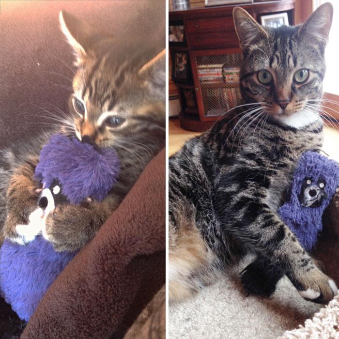 cani-gatti-prima-e-dopo-crescono-giocattoli-cuccioli-adulti-14