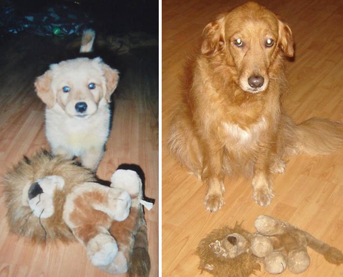 cani-gatti-prima-e-dopo-crescono-giocattoli-cuccioli-adulti-15