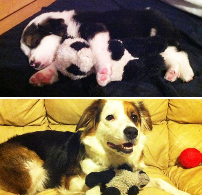 cani-gatti-prima-e-dopo-crescono-giocattoli-cuccioli-adulti-16