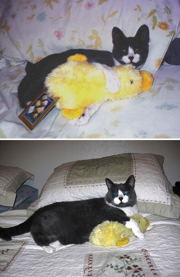 cani-gatti-prima-e-dopo-crescono-giocattoli-cuccioli-adulti-17