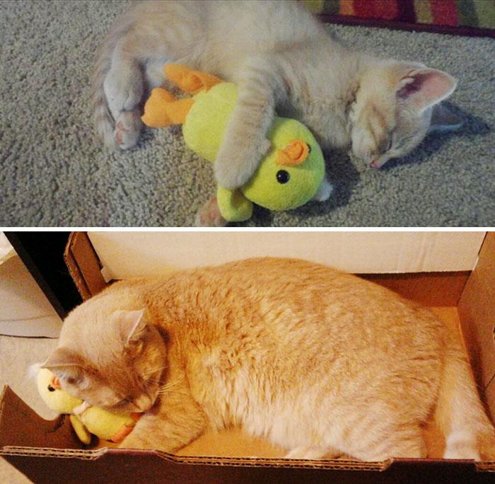 cani-gatti-prima-e-dopo-crescono-giocattoli-cuccioli-adulti-18
