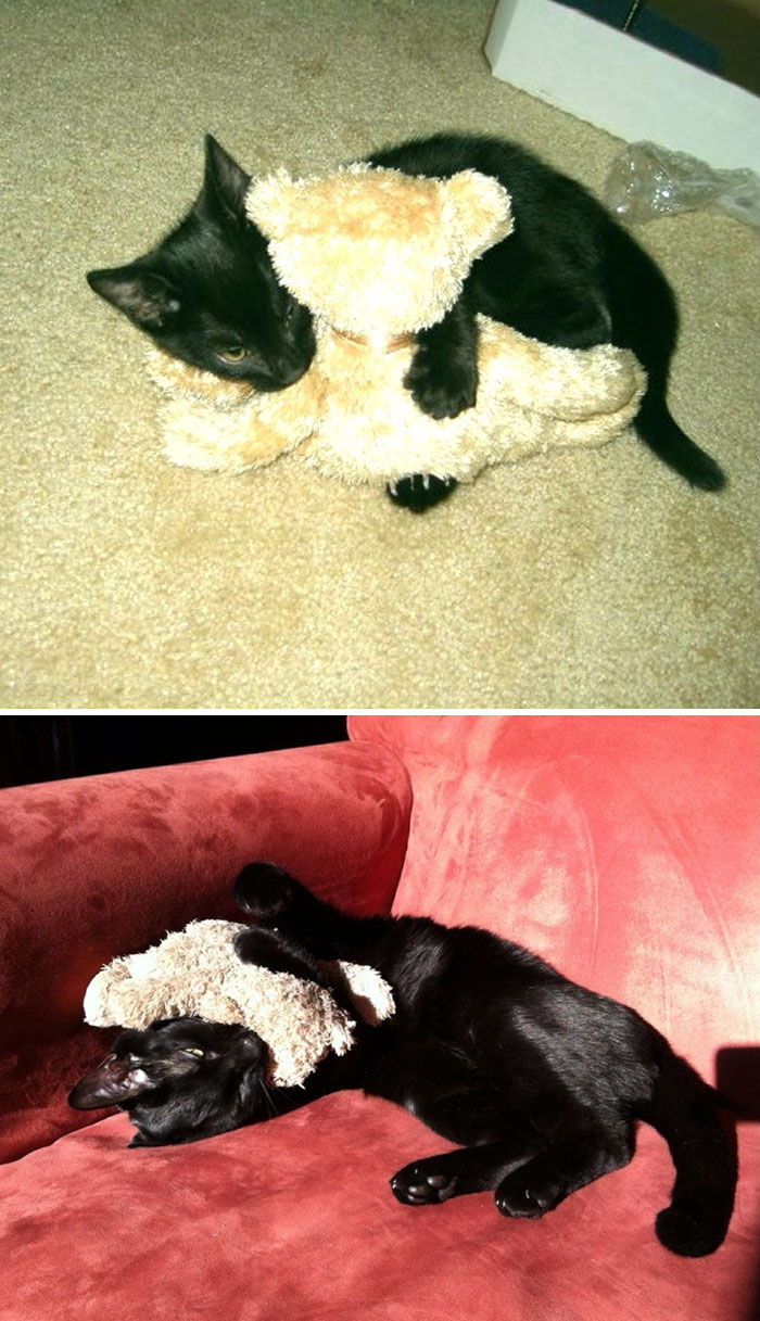 cani-gatti-prima-e-dopo-crescono-giocattoli-cuccioli-adulti-20