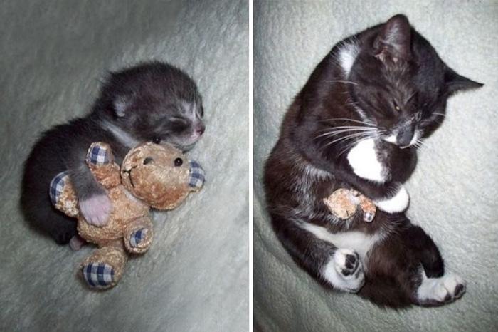 cani-gatti-prima-e-dopo-crescono-giocattoli-cuccioli-adulti-23